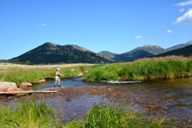 fly fishing for trout in rocky mountain national park