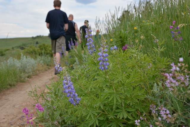 Guided Boulder Wildflower Hikes