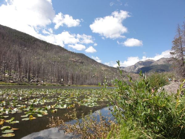 low angle shot of cub lake with lily pads